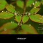kiss the rain 05