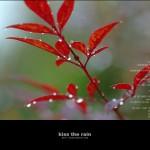 kiss the rain 08