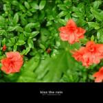 kiss the rain 14