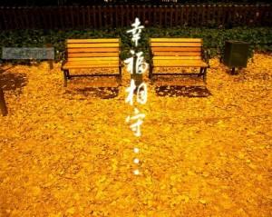【网络美文】等你,在这个秋季 作者:翊的月亮