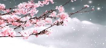 【古典诗词】临江仙 文/燚冰