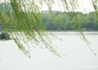 【现代诗歌】风中的树