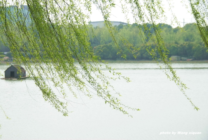 fengzhongdeshu