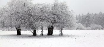 【网络投稿】雪之梦 文/燚冰