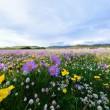 【投稿】【原作】遍地鲜花在为谁开放(散文诗)