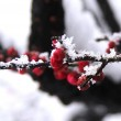 【散文随笔】冬韵 梅花雪 /云朵