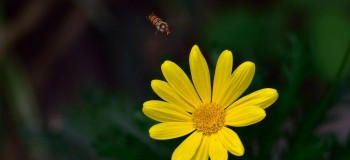 【散文随笔】秋季,一朵黄花在风中摇曳