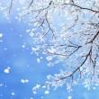 【现代诗词】雪飞琴韵/云朵