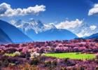 三月春风百花开 文 :雪莲